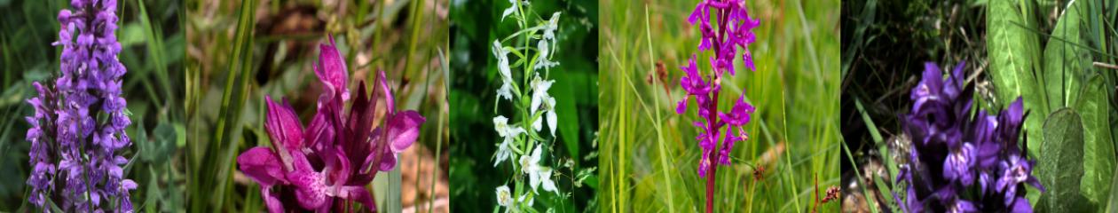 Urseetal: Schutzgebiet und Kleinod