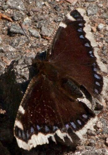 2015-05-16 Falter an der Gutach (13 von 16)