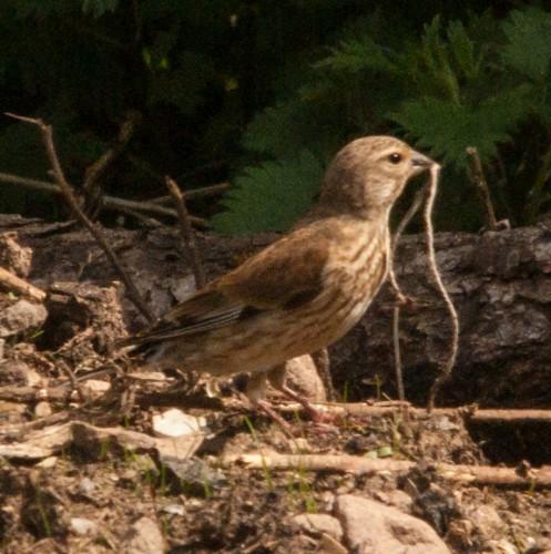 20150512 Unbekannter Vogel (1 von 4)