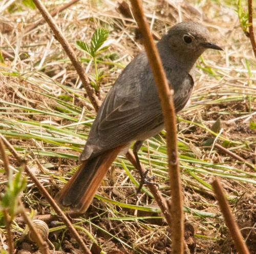 20150512 Vögel (1 von 3)