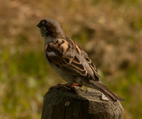 20150512 Vögel (2 von 3)