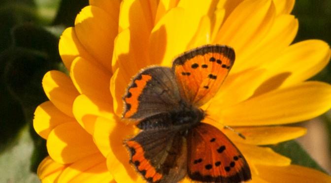 Bericht Schmetterlingswanderung