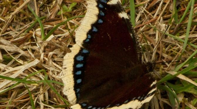 Beginn der Schmetterlingssaison