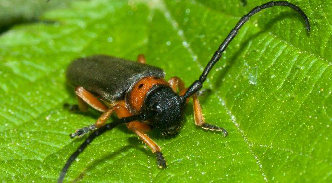 Insekten Ende Mai im Urseetal